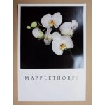 MAPPLETHORPE-MO9