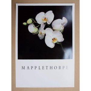 MAPPLETHORPE-MO9